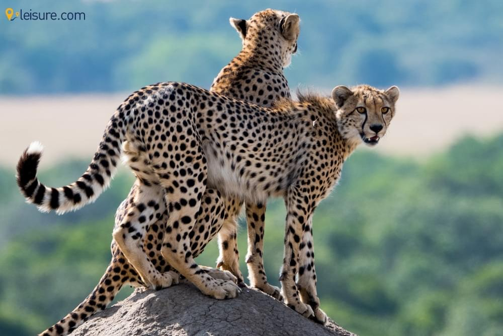 Spellbinding Things You can do on a Kenya Safari Vacation