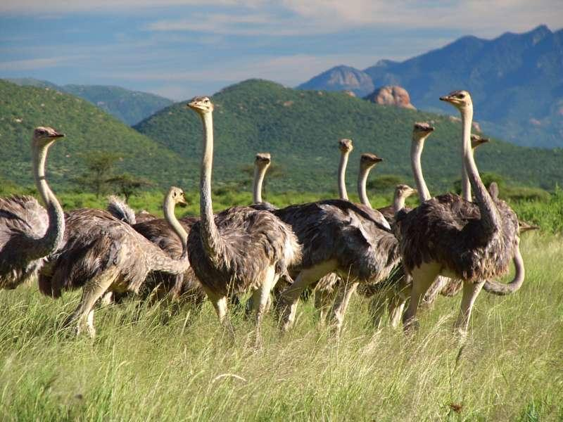 An Amazing Tanzania Safari Tour