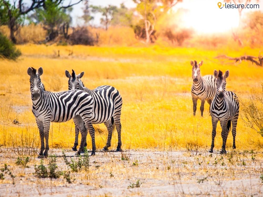 Best Things to Do in Botswana Safari Camps: Detailed Itinerary