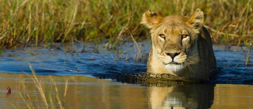 Amazing Experience at Botswana Safari