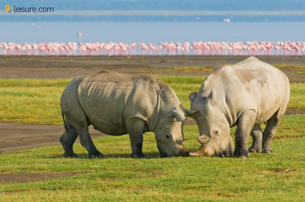 10 Days Kenya Safari Tour Package for Your Wanderlust