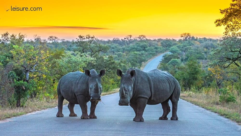 Uncover the Unseen on this Customized South Africa Safari Vacations
