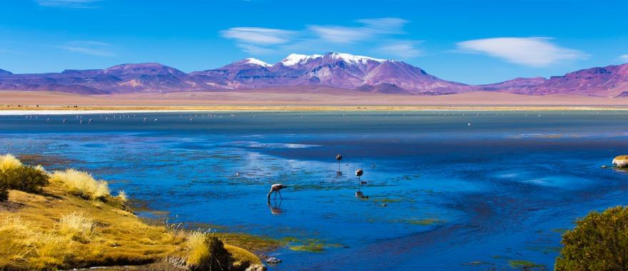 Excellent Vacation In Chile