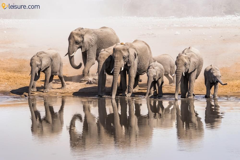8-day Desert and Etosha Namibia Safari Holiday Package