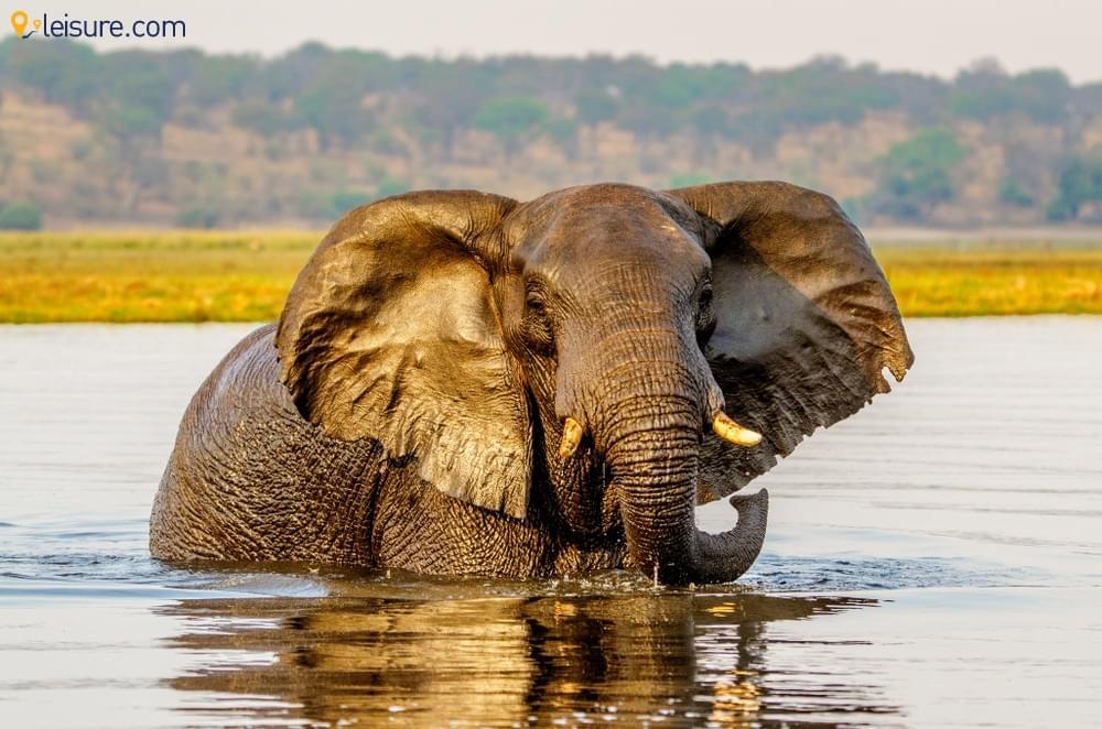 Best of Zimbabwe Safari 2019: An Unforgettable 10 Days Experience