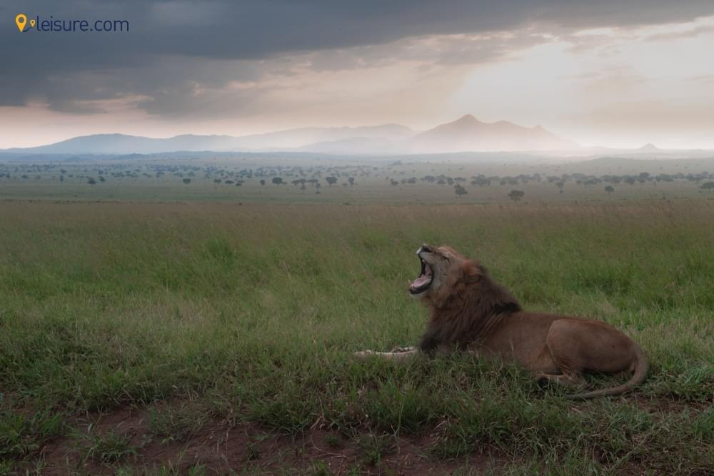 8-day Uganda Camping Adventure for Solo Travelers