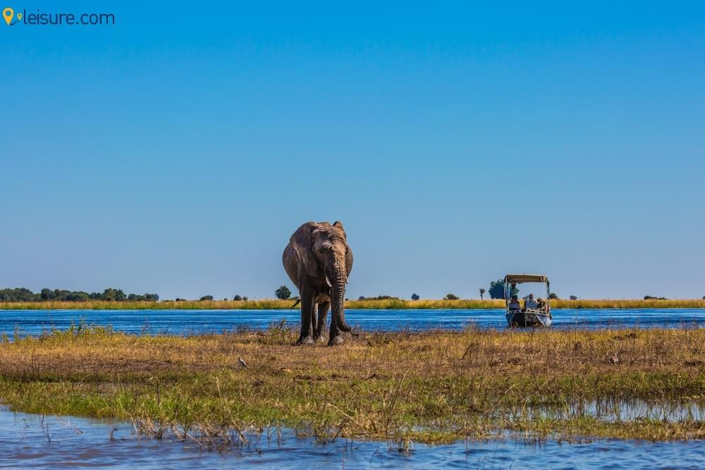 Get Amazed and Delighted with this 8-day Botswana Safari Tour