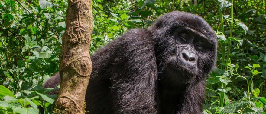 A Wonderful Trip to Uganda!