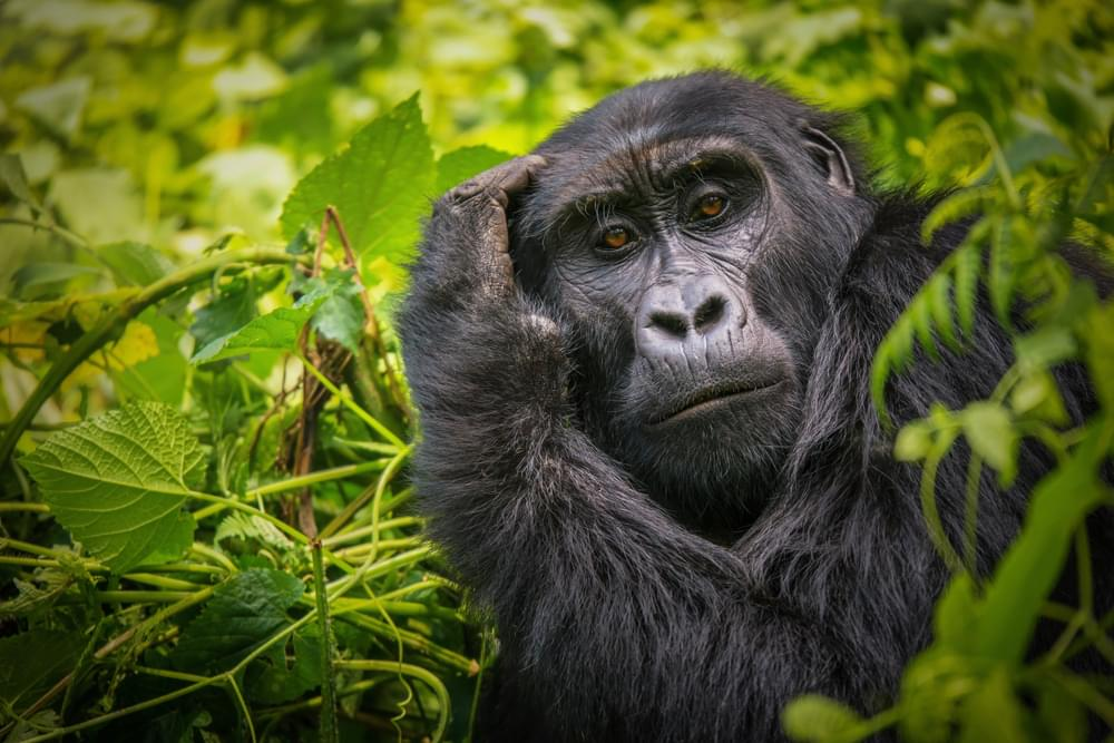 Explore Uganda Like Never Before with this 10-day Travel Itinerary