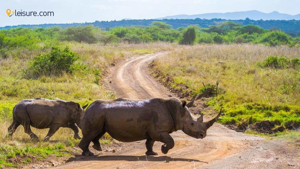 Kenya Safari: A Perfect Way To Explore The Best Destinations In Kenya