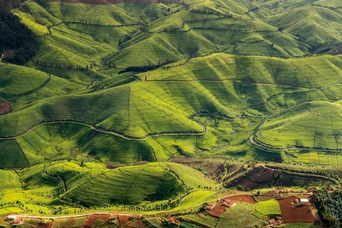 Travel Review: A Perfect Trip To Rwanda