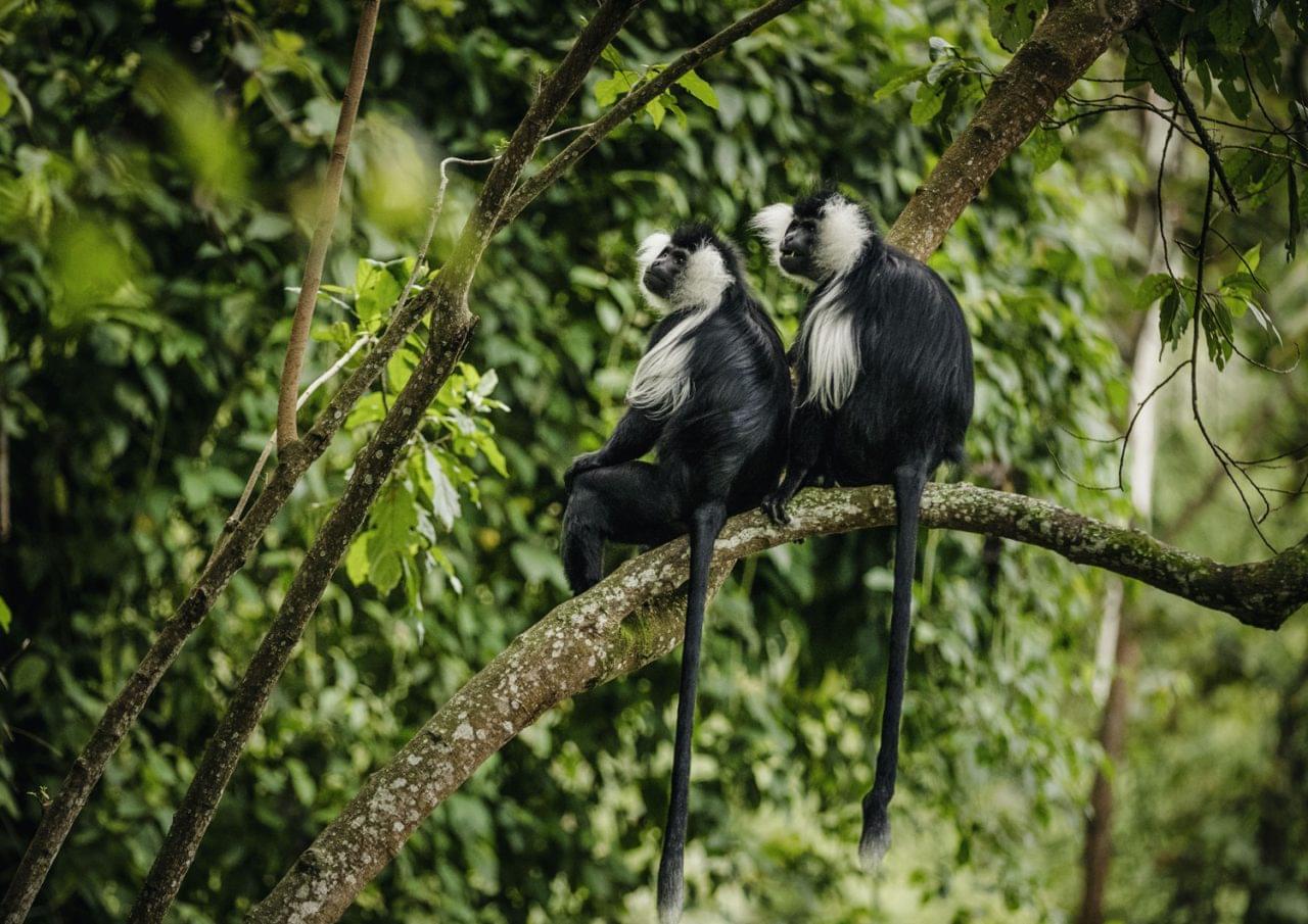 Travel Review: Family Trip To Rwanda