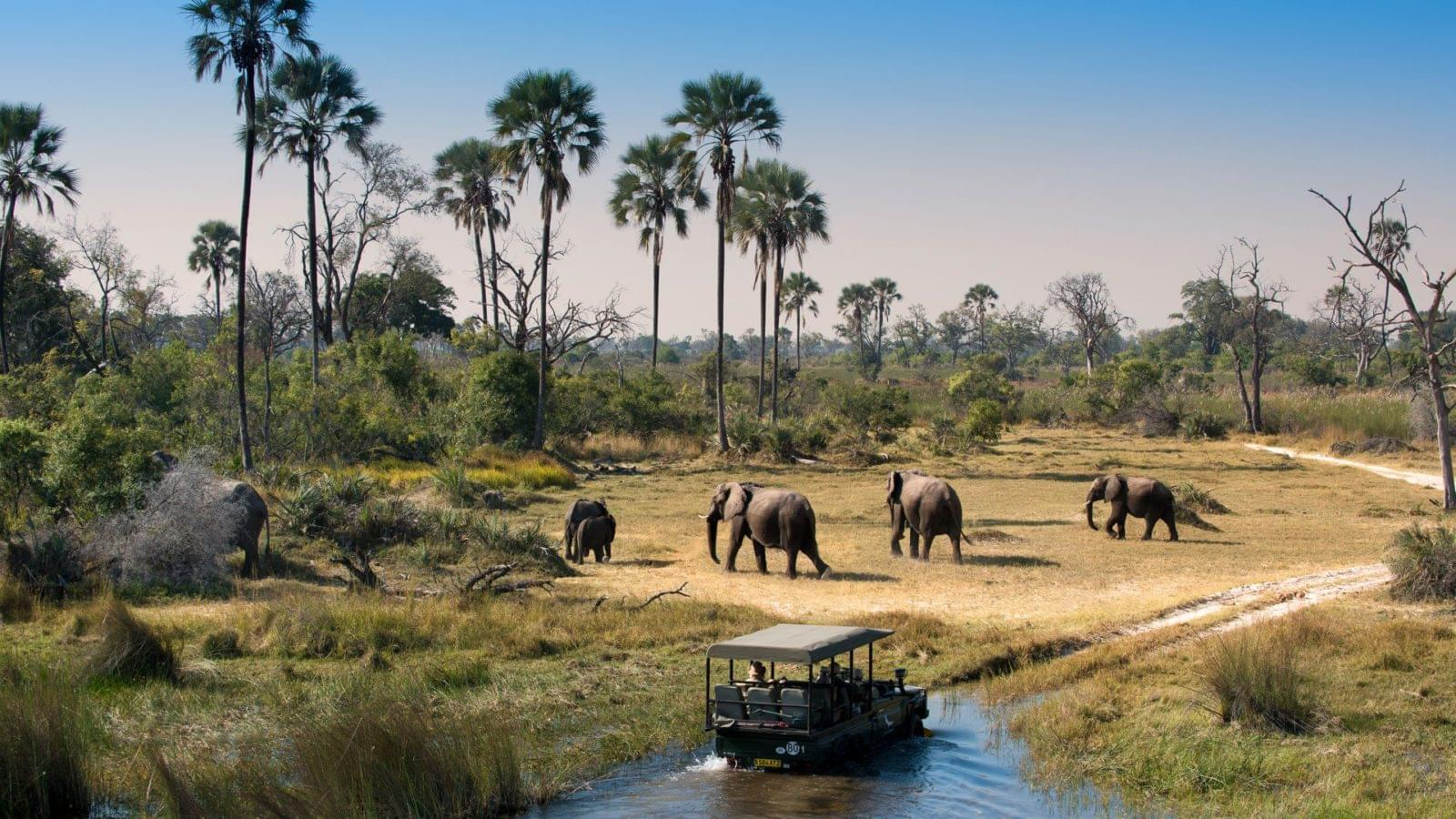 Travel Review: Best Botswana Tour With Family Ever