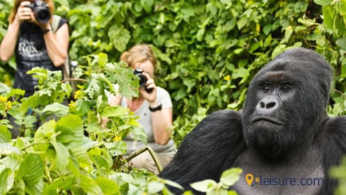 Amazing Safari Trip to Rwanda