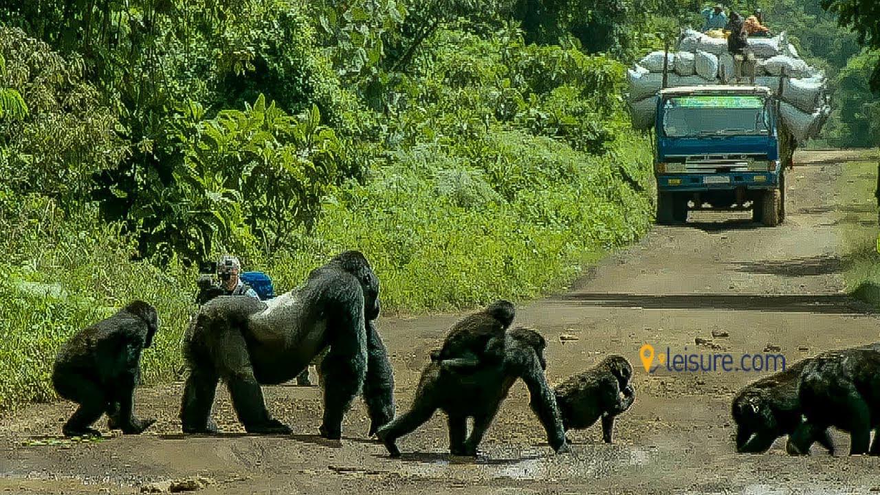 One of My Best Rwanda Gorilla Safaris