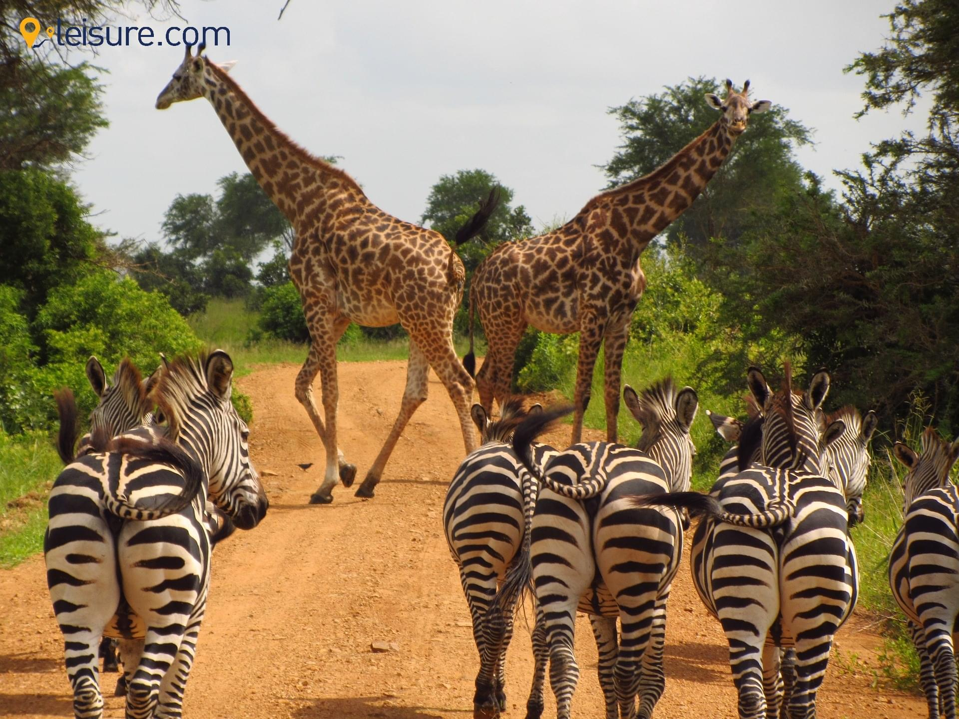 My trip to Tanzania still gives me goosebumps