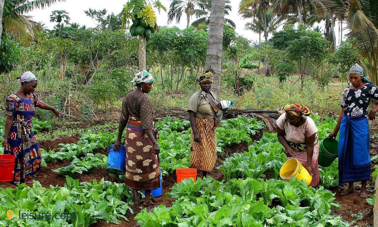 tanzania women field