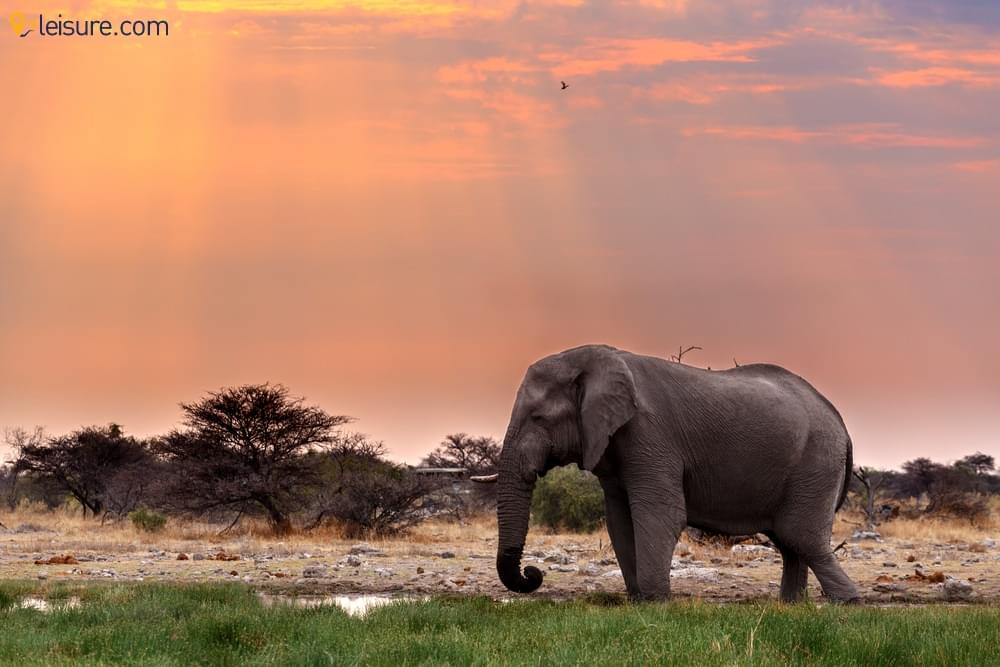 Discover the Incredible Landscapes, Culture and Wildlife of Namibia