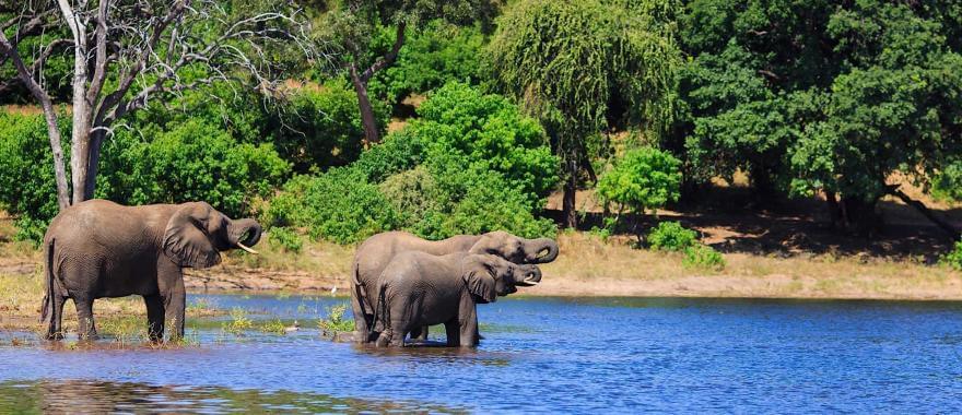Travel Review: Africa Safari, Botswana, Zimbabwe, Kruger & Chobe National Parks, Victoria Falls..