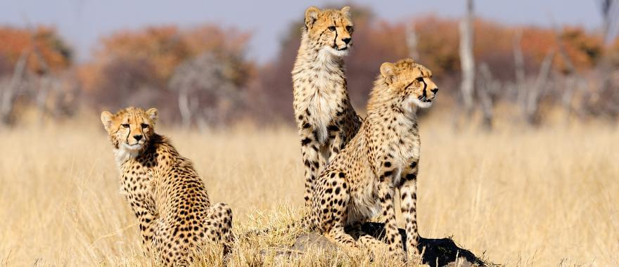 Travel Review: Perfect Tour To Zimbabwe, Africa Safari, Botswana, South Africa..