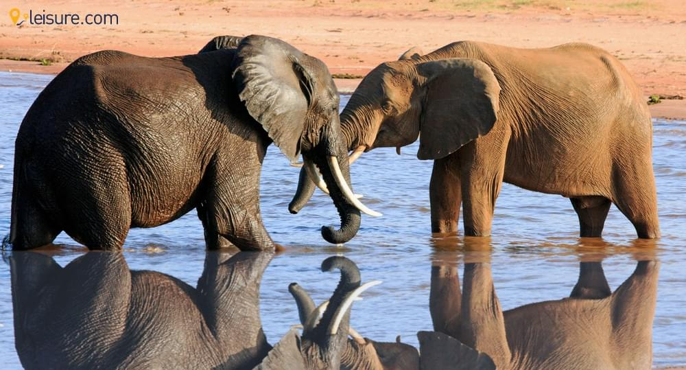 A VIP Zimbabwe Safari: Private Flights, Game Drives & Exclusive Camps