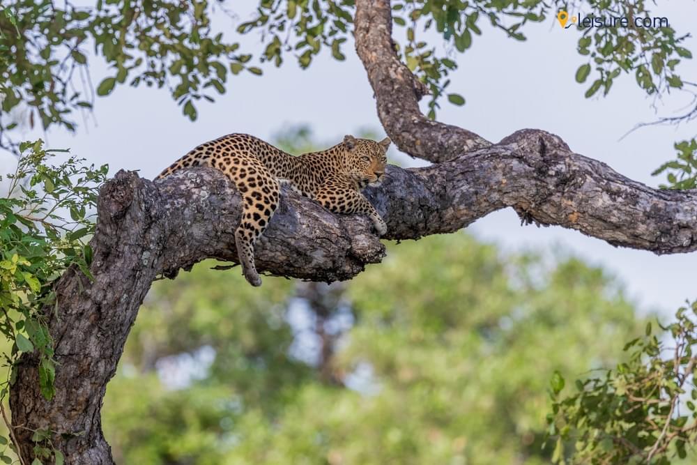Luxury Luangwa Safari & Relaxing at Cape Maclear in Zambia