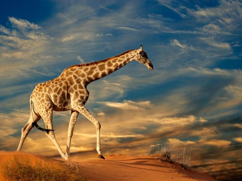 A Great Safari Into Namibia With The Best Travel Company