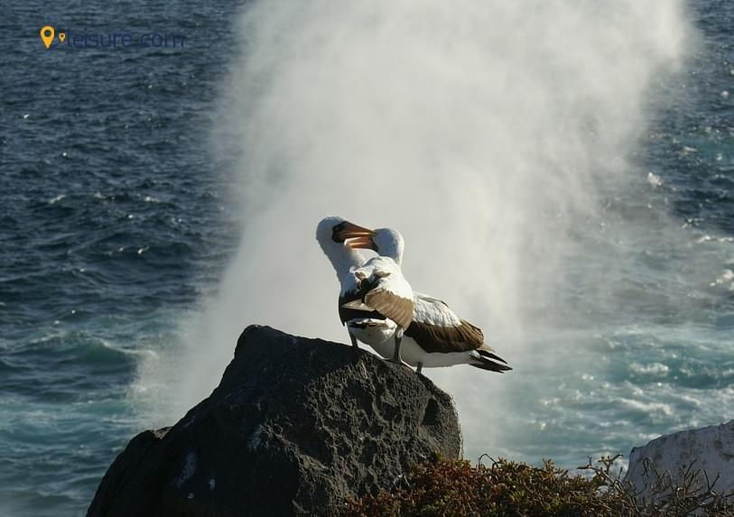 Honeymoon At The Grand Galapagos & Yacht Cruise