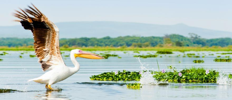 Unforgettable African Safari With The Best Kenya Tour Package