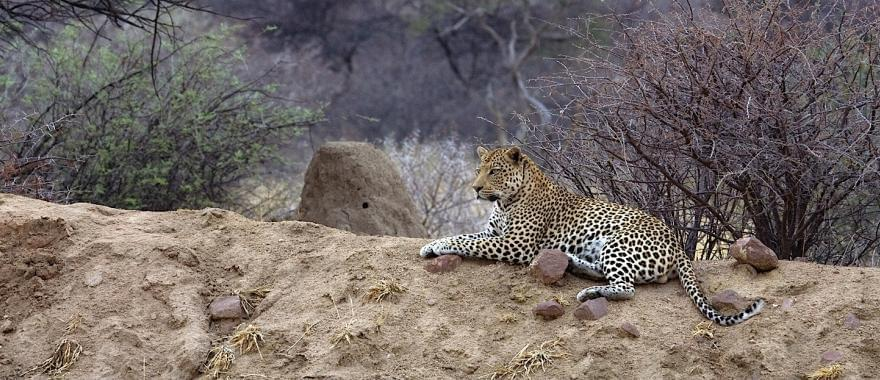 A Stunning Experience Of Namibia Safari With This Tour Guide