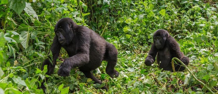 An Amazing experience awaits you at this Customized 7-Days Uganda Safari