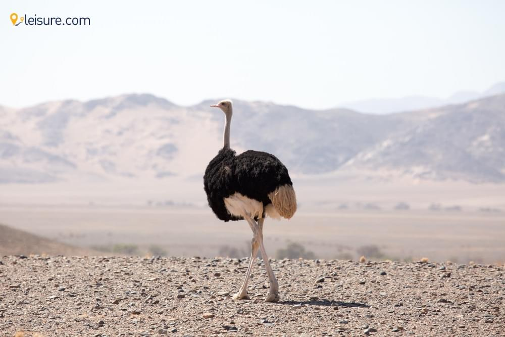 Enjoy the Never Ending Wonders of Namibia in This Safari Package