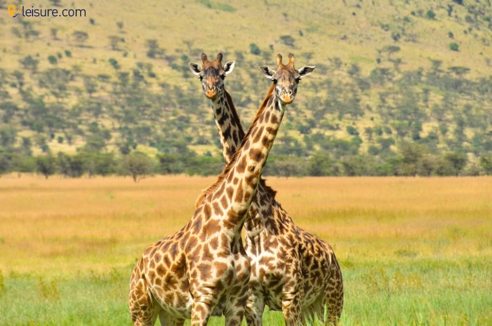 A Photographic Tanzania Safari Vacation: Lake Manyara, Tarangire, Serengeti