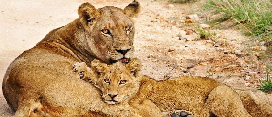 Excellent Zimbabwe Safari