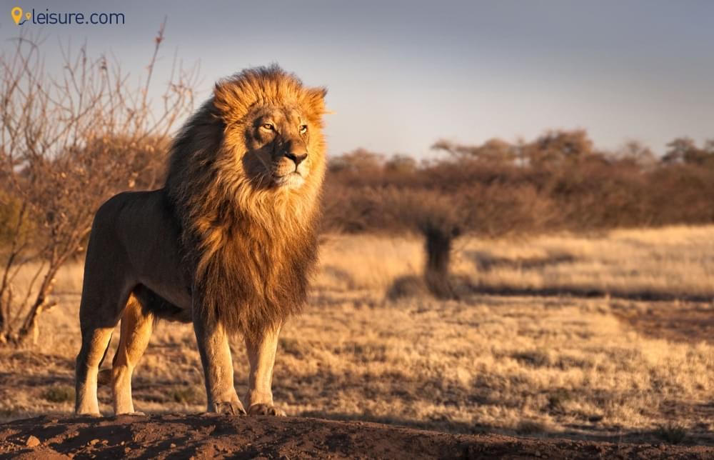 Enjoy The Majestic Kalahari in This Botswana Safari Vacation Package