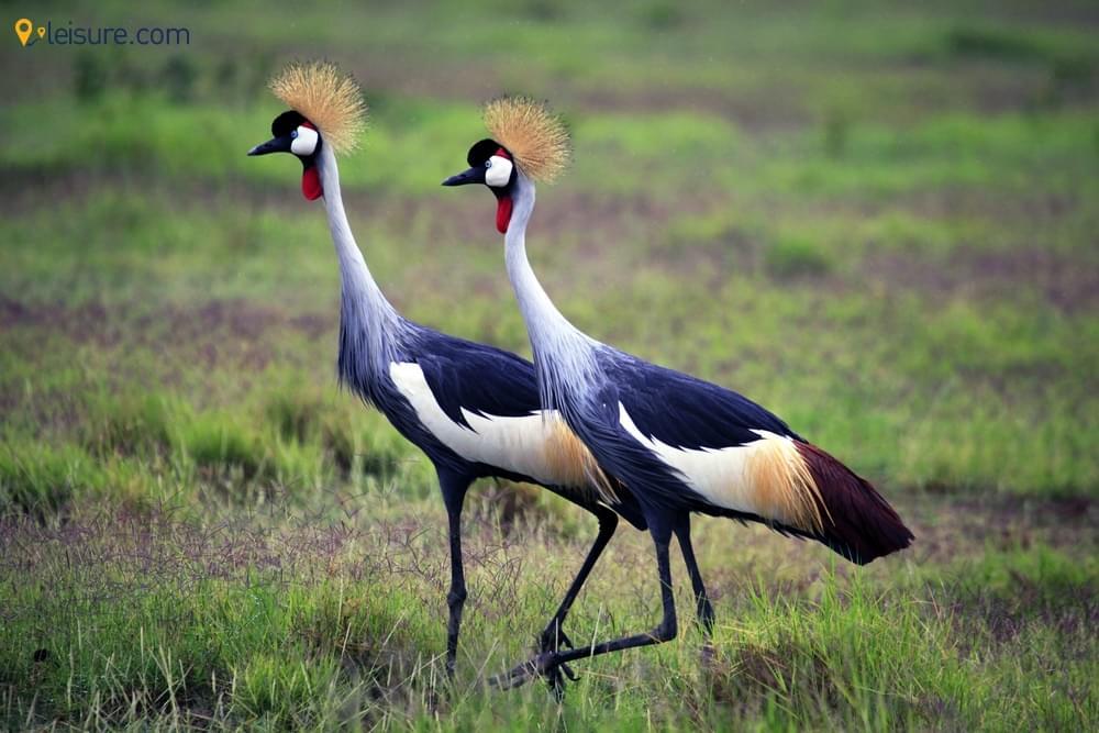 9 Days Best of Kenya Safari Tours