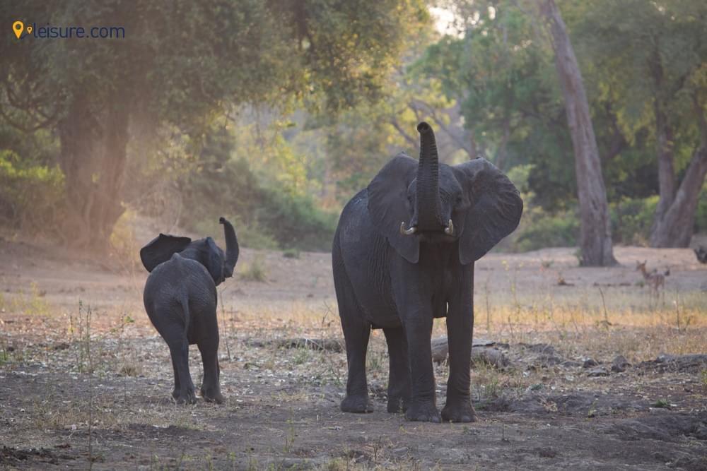 Enjoy the Bets of Zimbabwe in this signature 10-Days Zimbabwe Safari Itinerary