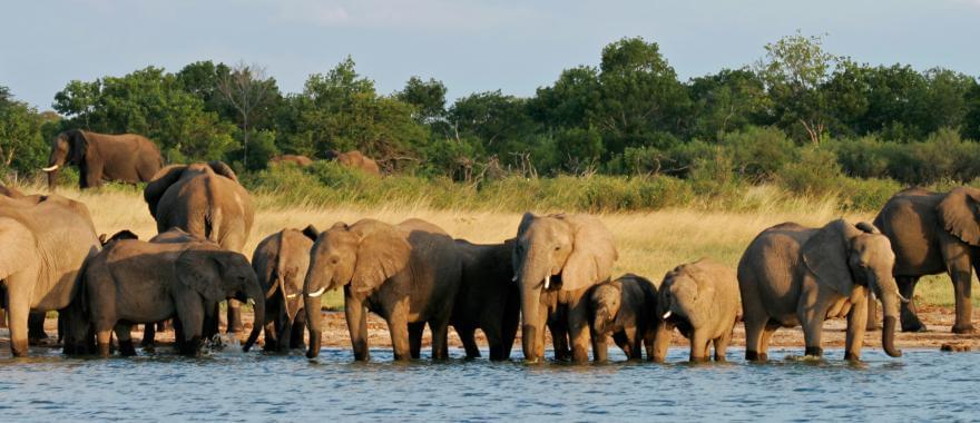 Zimbabwe Safari - My Wonderful Experience