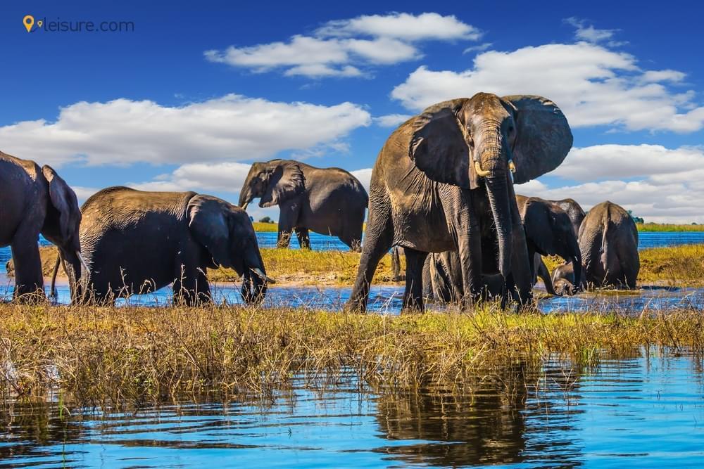 Chobe National Park, The Ultimate Camping Spot In Botswana Safari