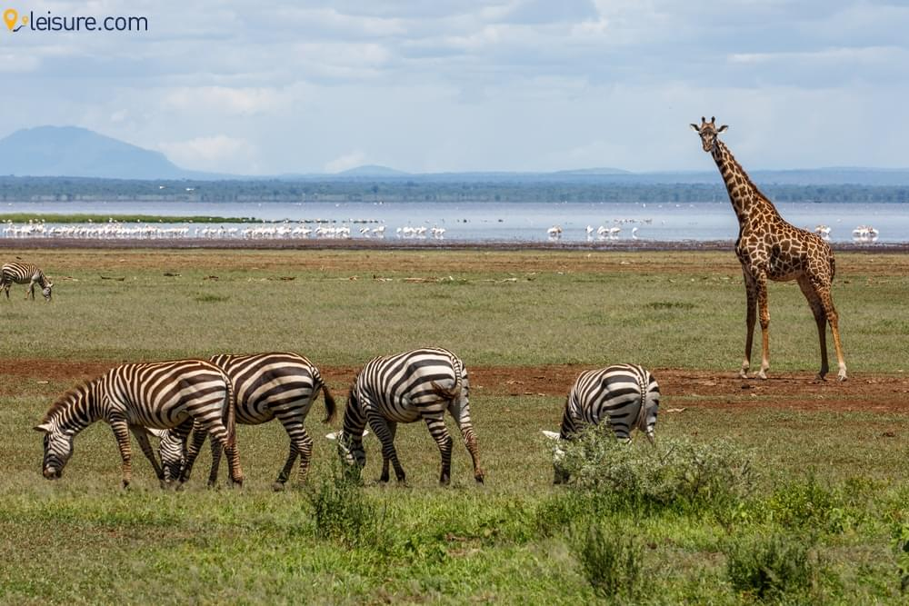 Enjoy A Tailormade Tanzania Safari And Beach Holiday