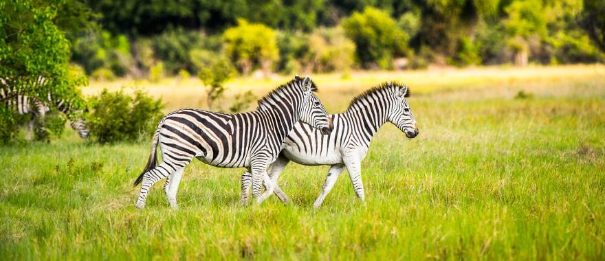 Amazing Trip To Zimbabwe