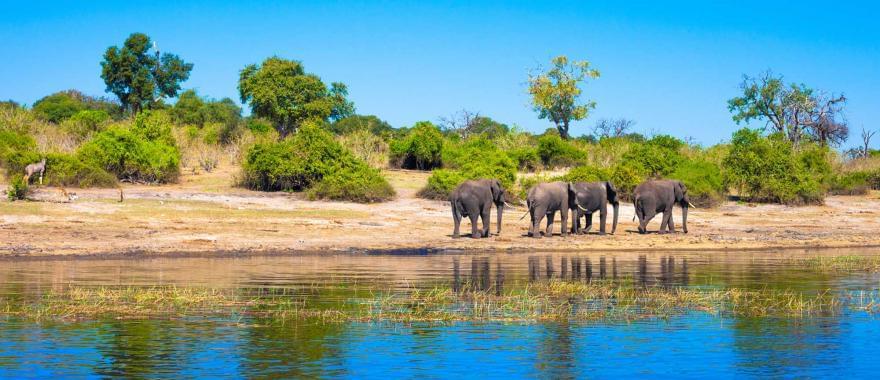 Botswana safari Review