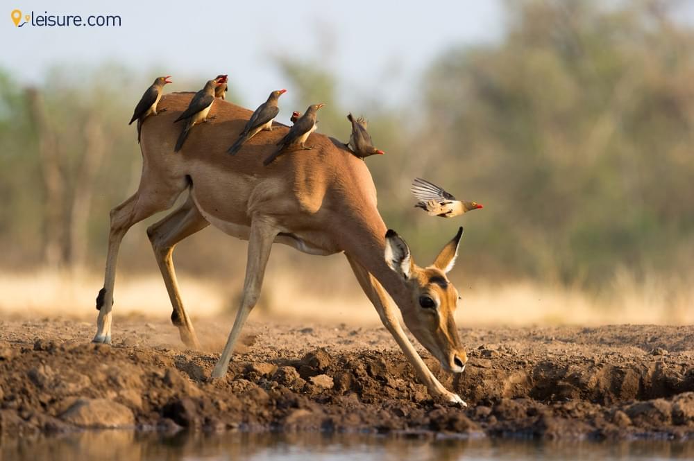 Spending 4 Days With The Wilds In Botswana Safari