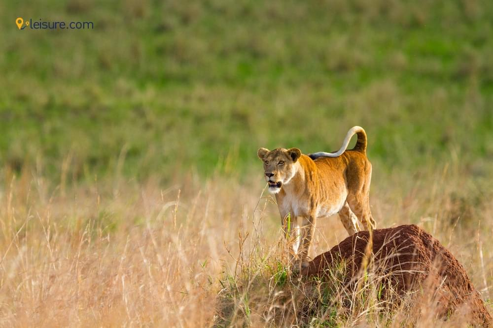 A 5-day Uganda Safari Itinerary to Explore the Untouched Destinations of Africa