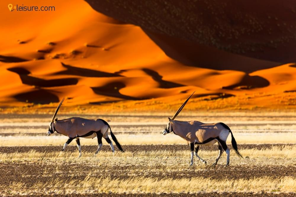 An Ultimate Guide to Namibia Safari Adventure