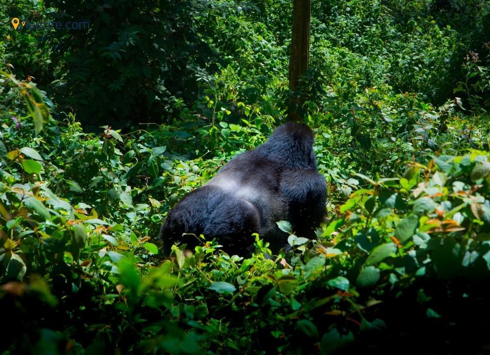 A Classic Rwanda Safari for the Nature Lovers