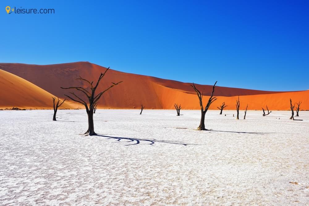 Guide to Namibia Safari Adventure