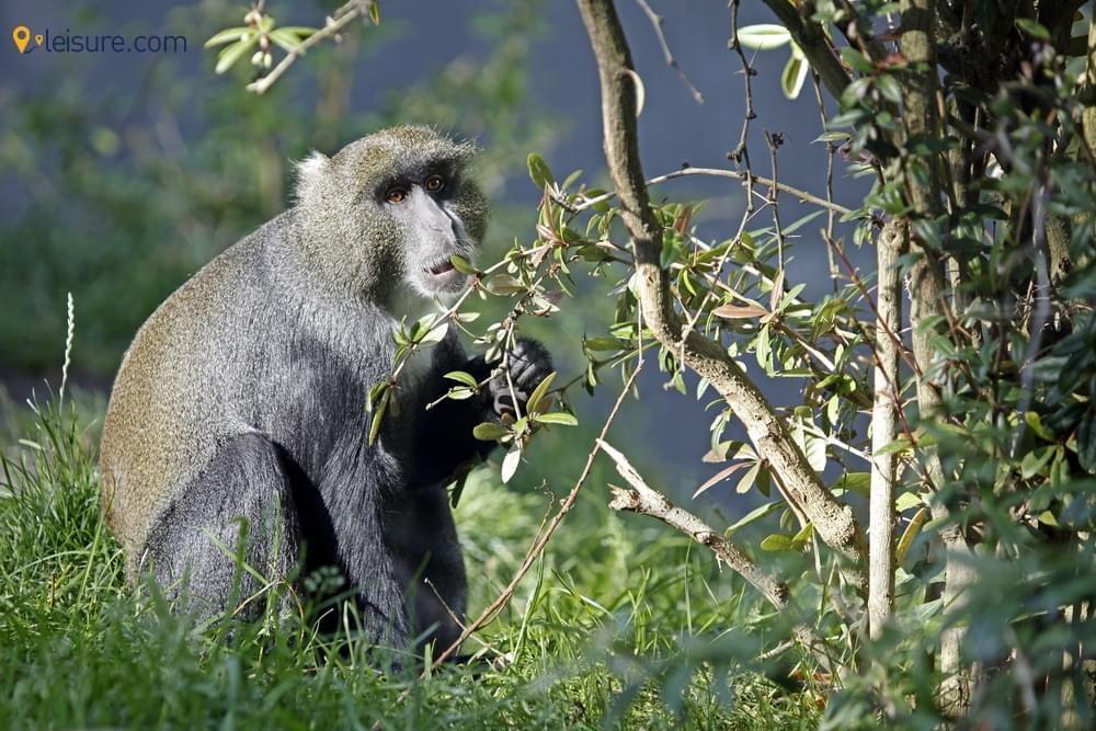 Trekking Tours in Rwanda