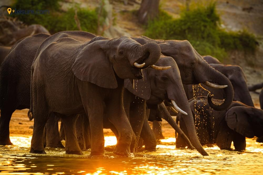 Visit in Botswana in