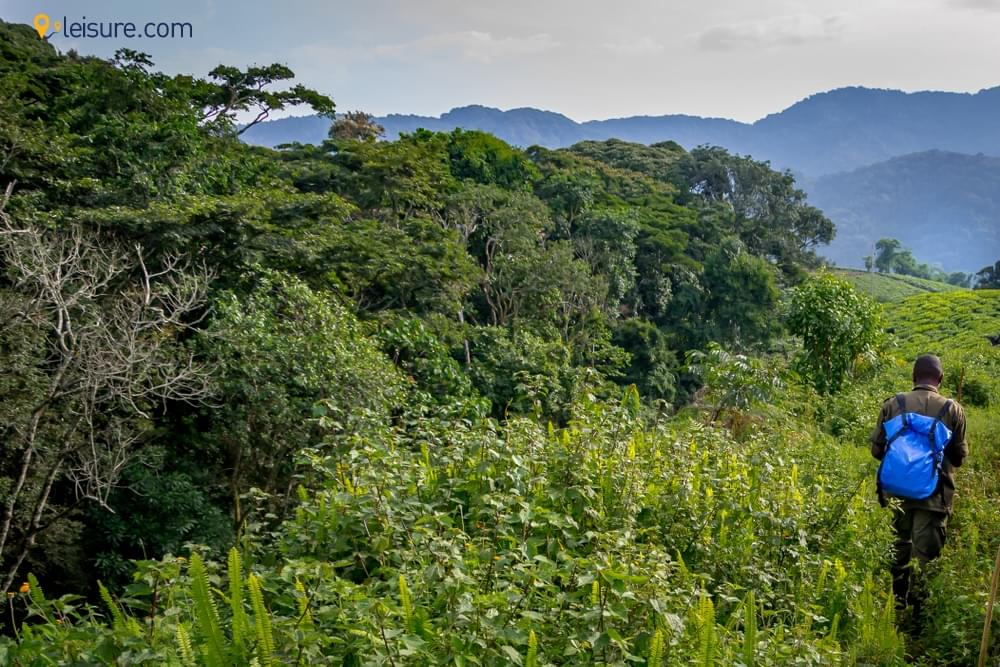 Rwanda safari do